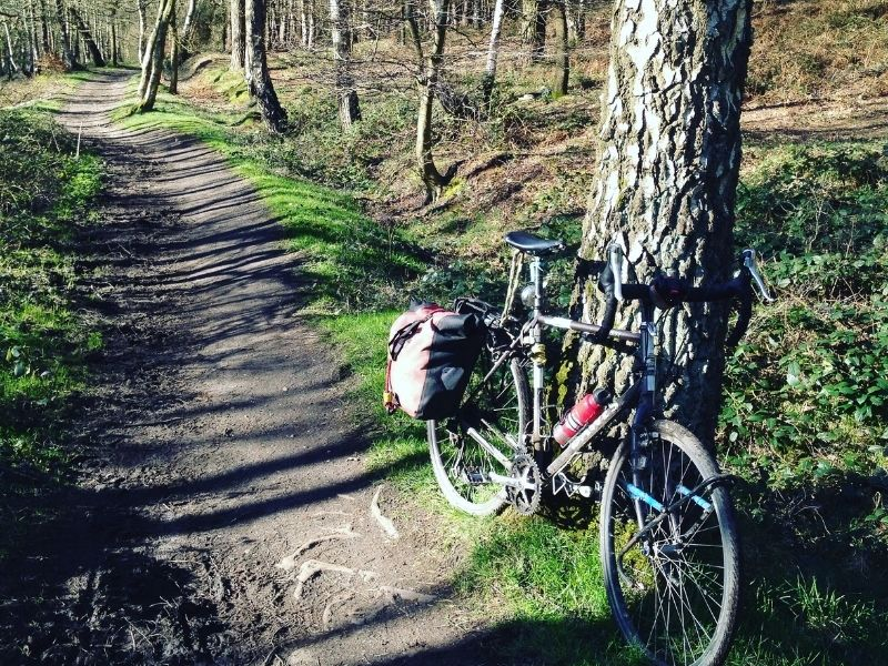follow the dog red route cannock chase